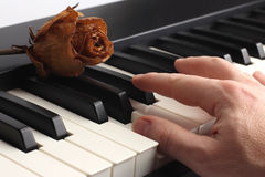 Hand playing the piano lying on it with dried rose Stock Photography