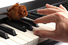 Hand playing the piano lying on it with dried rose Royalty Free Stock Images