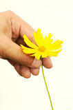 A hand plucking a flower Royalty Free Stock Photos