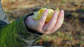 Hand with potato chips stock video footage