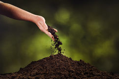 Hand pouring black soil on green plant bokeh background Stock Images