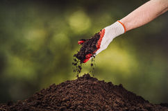 Hand pouring black soil on green plant bokeh background Stock Image