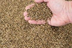 Hand pouring hemp seeds Stock Photos