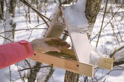 The hand pours the feed into the bird feeder winter snow stock image