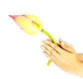 Hand praying bud of lotus for worship Stock Photo