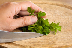 Hand preparing parsley for chopping Stock Photography