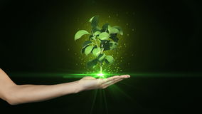 Hand presenting digital green plant growing Royalty Free Stock Photography