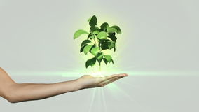 Hand presenting digital green plant growing stock video footage