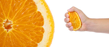 Hand press orange and macro slice. Royalty Free Stock Photo