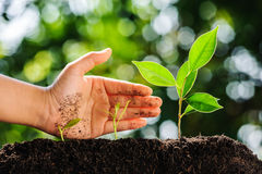 Hand protect green plant growing on soil Stock Image