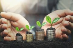 Hand protect money stack with plant growing on coins. Concept finance stock photo