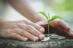 Hand protect money stack with plant growing on coins. saving money coins, Hands that are taking care of trees on coins, concept. Finance royalty free stock images