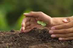 Hand protect small plant grow on soil royalty free stock photography