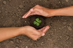 Hand protect small plant grow on ground royalty free stock images