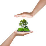 Hand protect tree Royalty Free Stock Photography