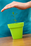 Hand protecting a baby plant Stock Images