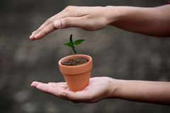 Hand protecting a baby plant Stock Image