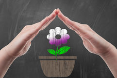 Hand protecting flower pot draw on school blackboard Royalty Free Stock Photos