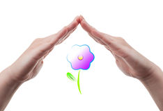 Hand protecting a flower Stock Photos