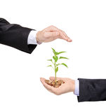 Hand protecting a green plant Royalty Free Stock Photos