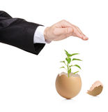 Hand protecting a green plant in eggshell Royalty Free Stock Image