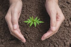 Hand protecting a green young plant with growing in the soil on. Nature background Stock Photo