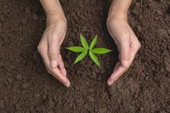 Hand protecting a green young plant with growing in the soil on. Nature background Stock Images