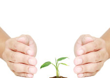 Hand protecting plant Stock Photos