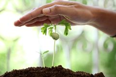 Hand protecting plants Royalty Free Stock Image