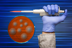 Hand in protective glove with  pipette and petri dish Stock Photography