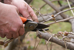 Hand with pruning shears Stock Images
