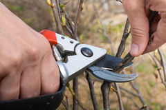 Hand with pruning shears Stock Photos