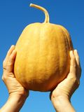 Hand with pumpkin Stock Image