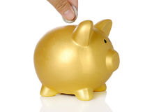Hand Put Coin Into Piggy Bank Stock Photo