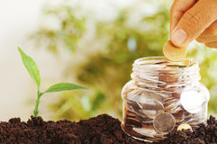 Hand put coins on plastic jars. And staced money with small green tree growth up from soil, concept in save and growth up step by step of business, finance Royalty Free Stock Images