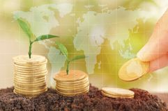 Hand put money tree growth up and stacked on coins with soil, concept in save money of business, finance, economy. And account bank Royalty Free Stock Photography