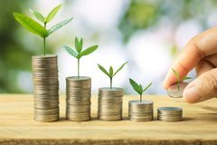 Hand put sapling growing up on stacked of money coins on green b. Okeh background Stock Photography
