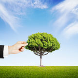 Hand puts a tree Stock Image