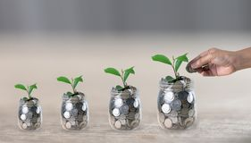 Hand putting a coin in a jar which a growing plant stock photos