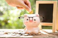 Hand putting coin to Piggy bank Royalty Free Stock Photography