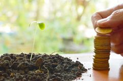 Hand putting gold coin arrange and little plant in dirt on wooden board Stock Image
