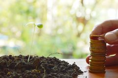 Hand putting gold coin arrange and little plant in dirt on wooden board Royalty Free Stock Image