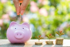 Hand putting gold coins into piggy bank Royalty Free Stock Images
