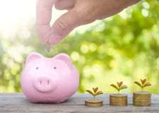 Hand putting gold coins into piggy bank Stock Photography