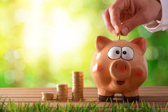 Hand putting money into piggy bank with green nature background. Concept savings with hand putting money into piggy bank on wooden table and nature background Royalty Free Stock Photography