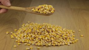 Hand quickly pours the corn grains from a wooden spoon onto a pile of corn. stock footage