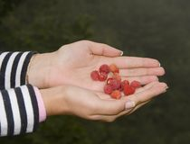 Hand with raspberries Stock Photos