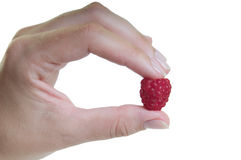 Hand with raspberry Stock Image