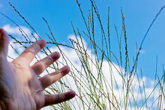 Hand reach for grass. Detail of hand reach out for grass,shallow depth of field Royalty Free Stock Photography