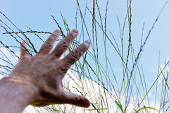 Hand reach for grass. Detail of hand reach out for grass,shallow depth of field Stock Image